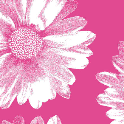 Pink Daisy Wrapture Printed Tissue